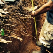 Loudoun County, Virginia Soil Evaluations (Perc Tests) for Septic Certification & Permitting