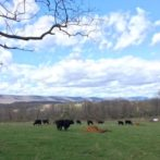 Loudoun County Virginia Onsite Wastewater Disposal Soil Feasibility Review